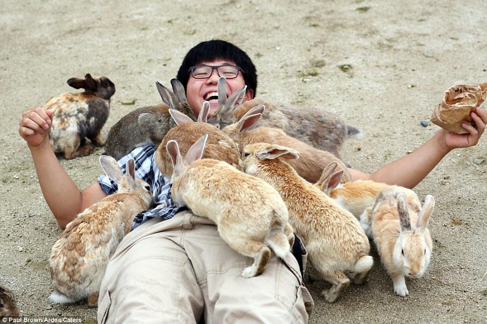 Top 10 Strangest Things in the World: Ōkunoshima, the Rabbit Island