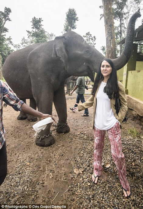 Liz Jones stands in front of one elephant which has been chained up behind her