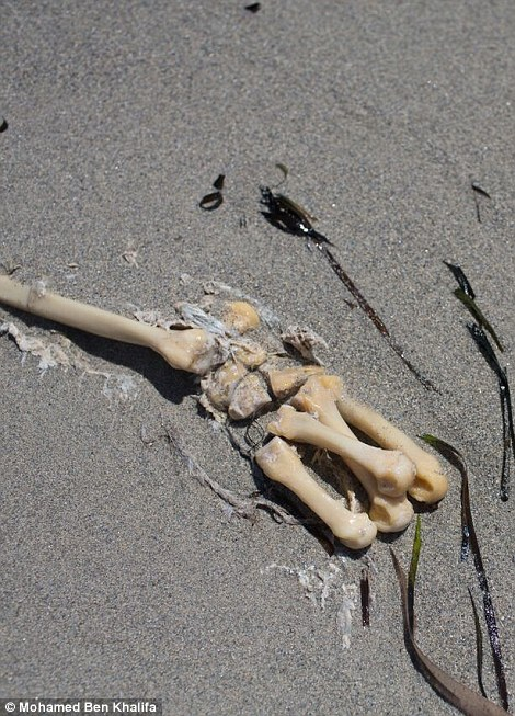 The bones of a migrant half buried in the sand