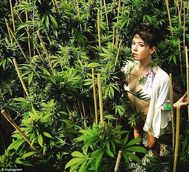 One of the members of his female entourage walks between the cannabis plants in a bikini