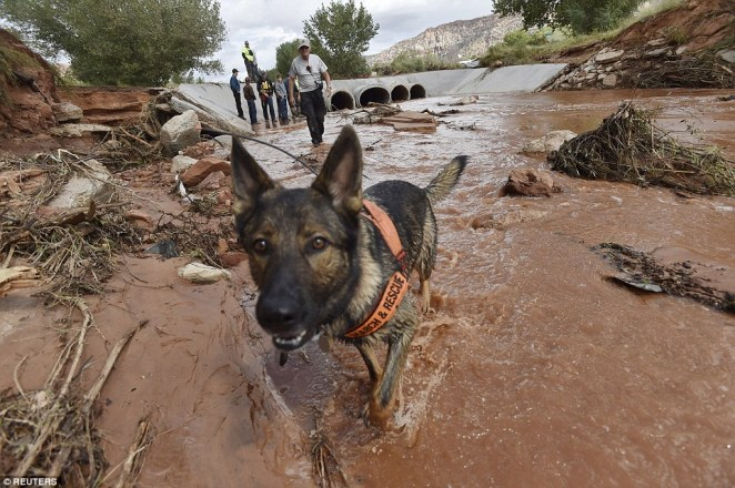 Image result for dog rescuing flood victims