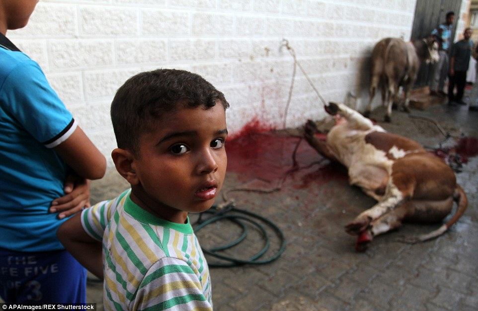 Up close: A child stands in front of a slaughtered cow in Rafah in Gaza on Eid al-Adha, one of the Islamic calendar's holiest days