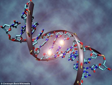 The researchers examined a type of DNA modification known as methylation, where molecules attach  to genes due to environmental factors while in the womb and shortly after birth