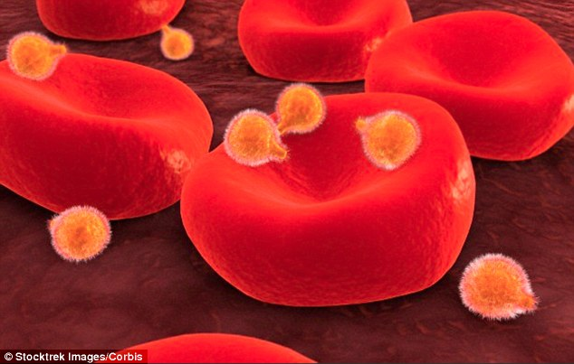 Scientists at the University of Copenhagen stumbled across the discovery while hunting for a weapon to fight malaria. They discovered a carbohydrate that the malaria parasite, illustrated, attaches itself to the placenta of of pregnant women, is identical to a carbohydrate found in cancer cells