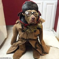 Otter the Pit Bull is Instagram's newest celebrity dog ...