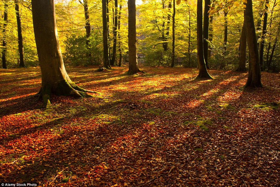 Free Wallpaper Fall Colours The Most Stunning Uk Places To Witness Autumn Colours