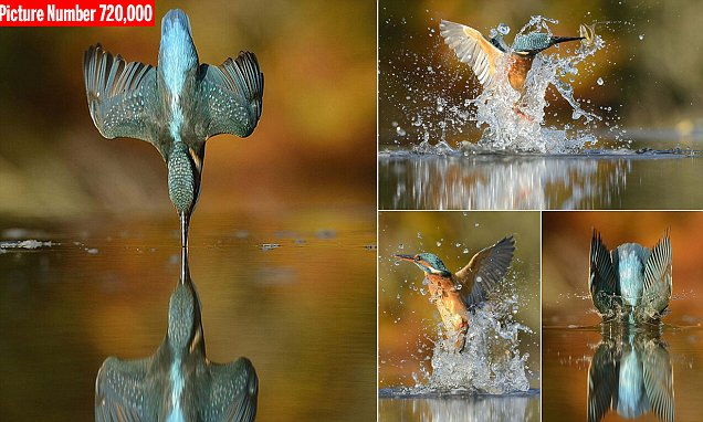 Photographer Alan McFadyen takes perfect picture of a