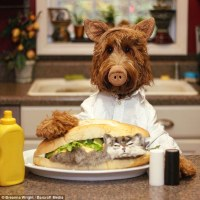 Oliver the Goldendoodle attracts an army of Instagram