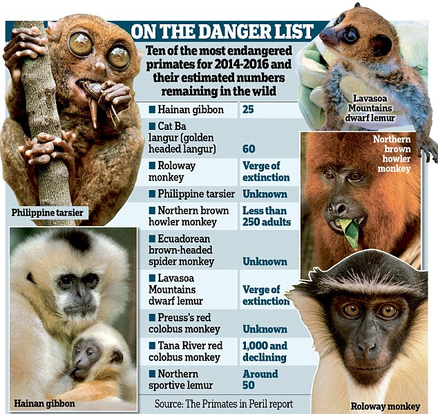 Danger list: Endangered primates that are battling for survival