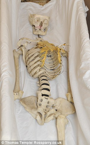 School skeleton to get funeral after it emerged bones are