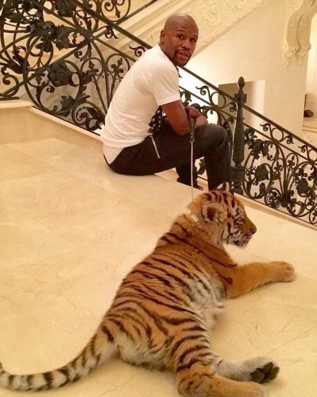 "Risultato immagini per Floyd Mayweather an the tiger"""