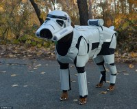 Doberman pinscher dog dresses as Star Wars Stormtrooper in