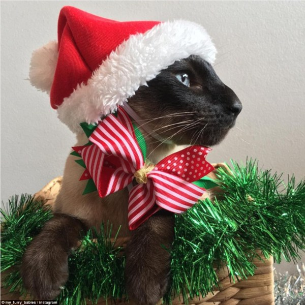 Christmas Cats with Santa Hats and Dress