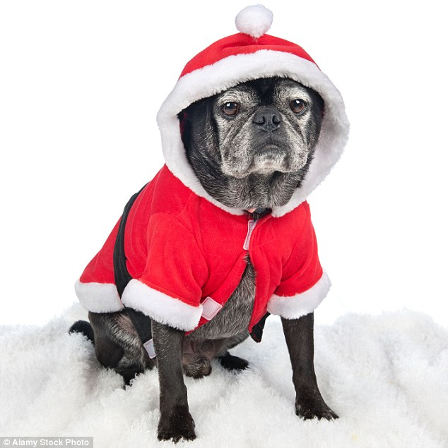 RSPCA Warns Dog Owners Over Dressing Up Their Pets At