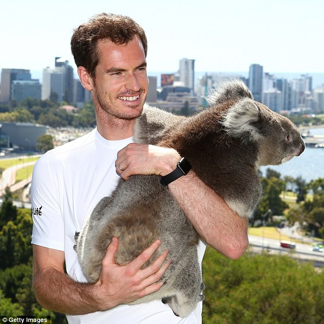 Image result for murray koala