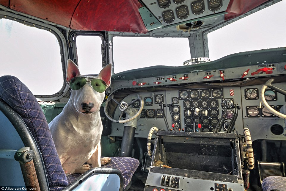 Ready for take off: Piloting a deserted plane in Belgium, the pooch poses wearing green tinted aviators in the captain's seat of the aircraft