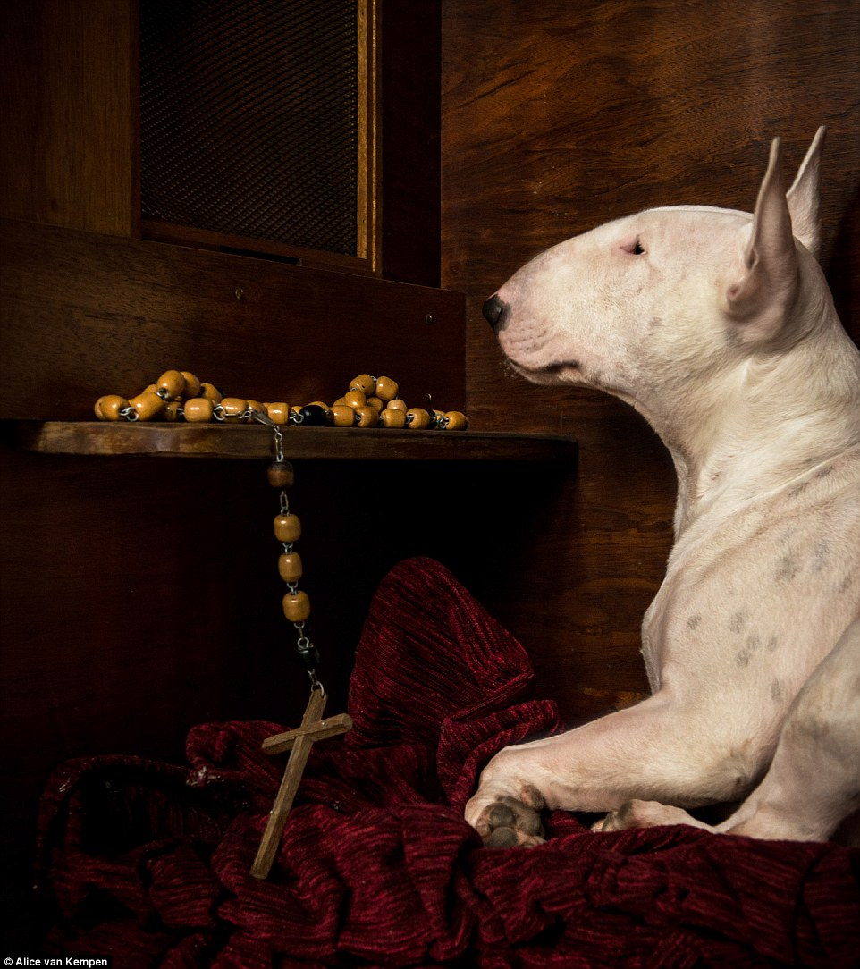 In an abandoned monastery in Belgium, the bull terrier is positioned beside a set of wooden rosary beads and a confession box