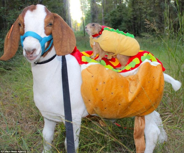 The adorable costumes given to animals on Dress up your