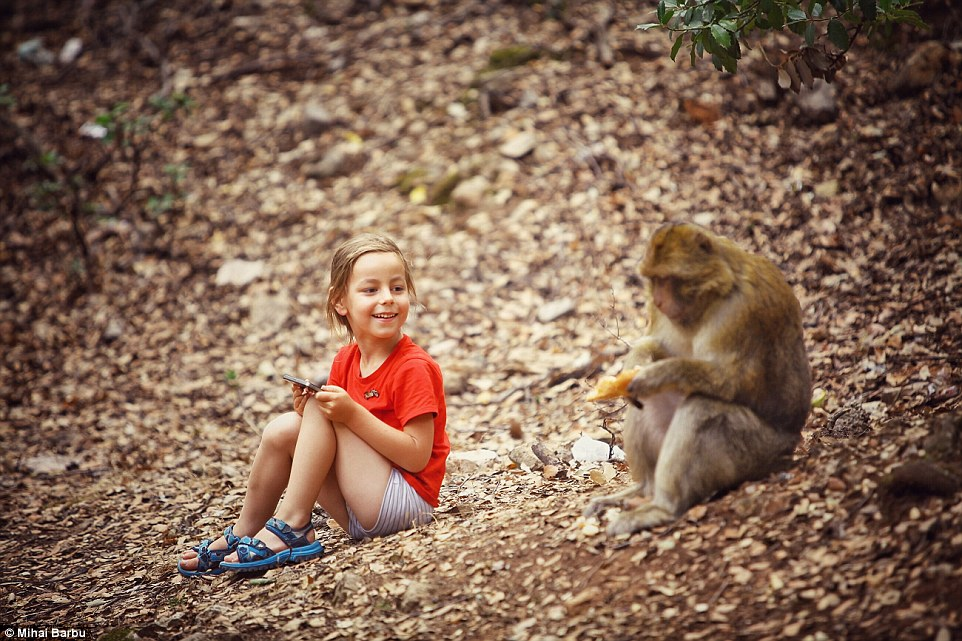 Making friends along the journey: The four-year-old had the chance to play with some wild monkeys in Morocco
