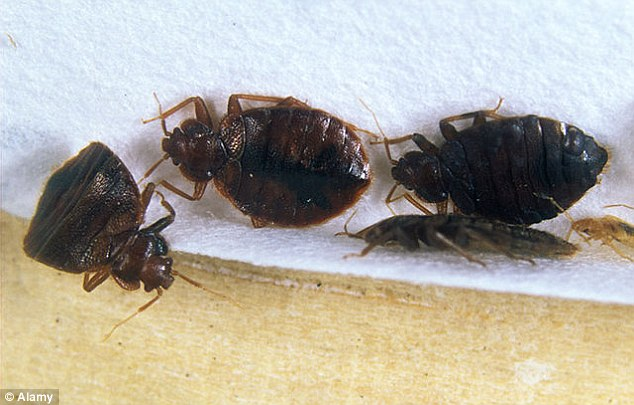 Reports of bed bugs in New York hotels have increased by more than 40 per cent between 2014 and 2015