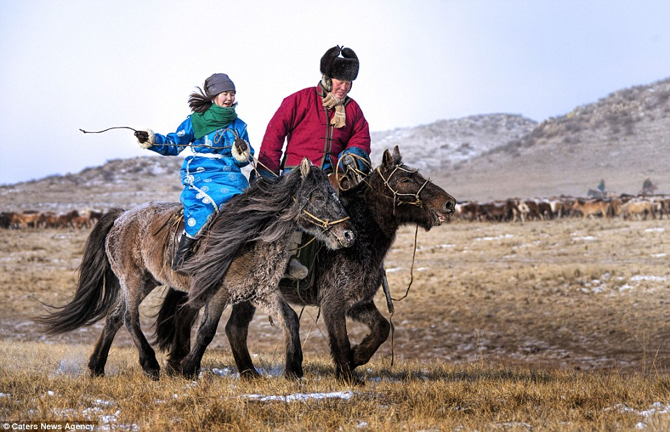 Image result for mongolian horse