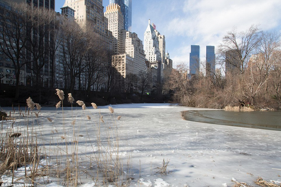 A lake in Central Park froze over as temperatures in the park reached minus-1 degrees on Sunday morning