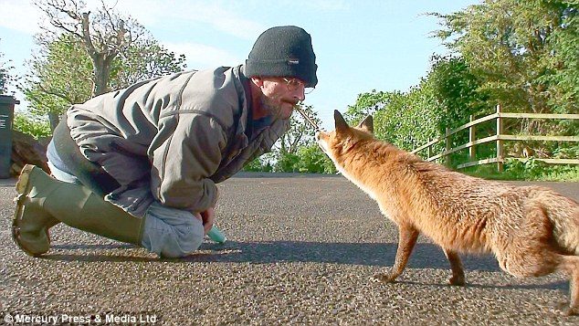 Simon Mead, 50, has adopted two wild foxes who he claims came to view him as their father after he offered them protection from the outside world