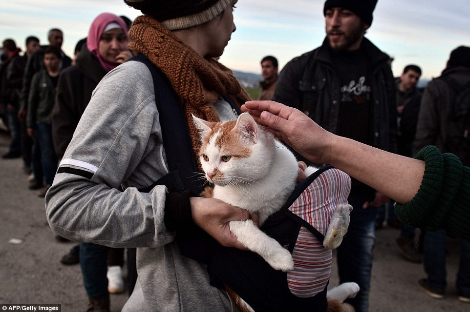 A Syrian woman holds her cat named Taboush, which she brought with her from Syria, at the camp at the Greek-Macedonian borders