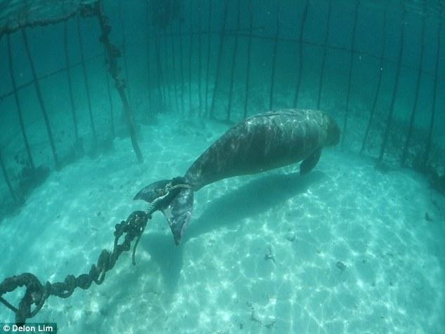 Poor dugong