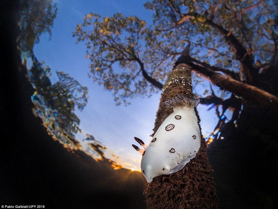Photographer Fabio Galbiati impressed the judges with this image of a pristine mangrove