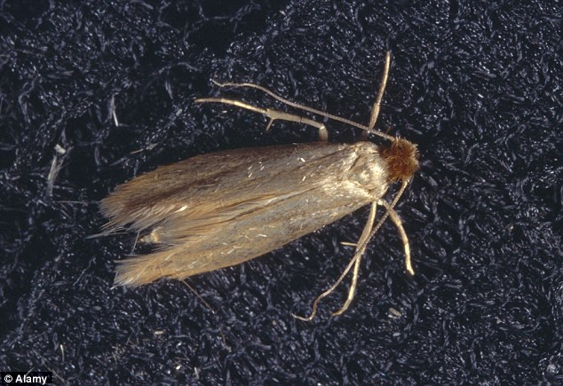 Moth experts advise ROSS CLARK on stopping the insects