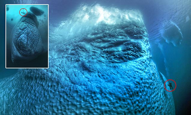 Tobias Friedrichs photographs reveal how huge icebergs are BELOW the surface  Daily Mail Online