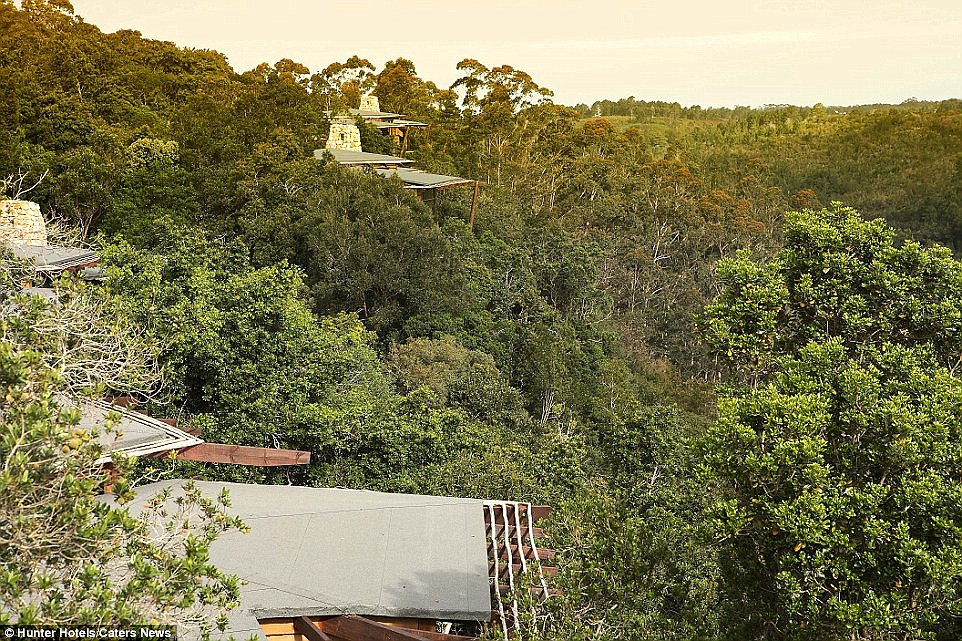 Tsala lodge's treetop suites and two-bedroom villas come with infinity pools on private decks, providing a perfect opportunity to unwind