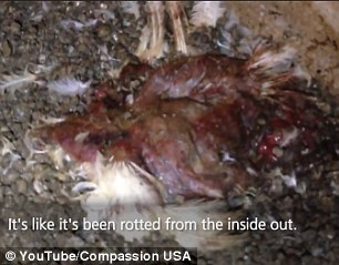 The gruesome footage shows close-ups of the dying, abandoned birds
