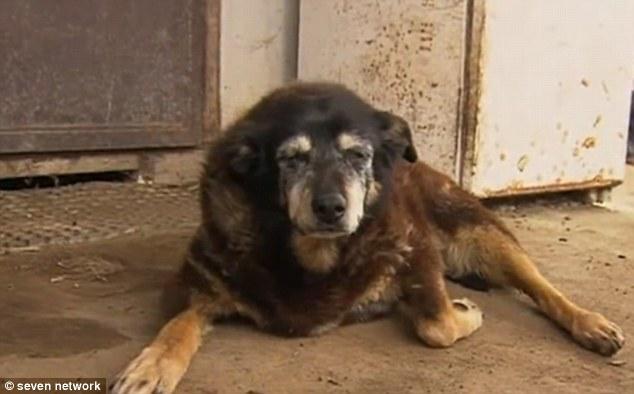 world's oldest dog dies