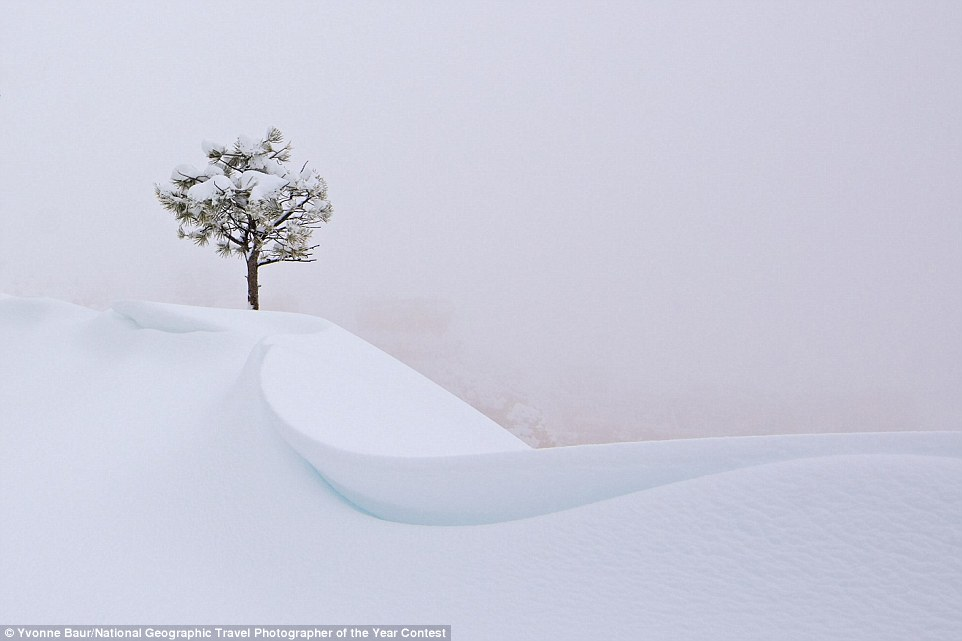 During a snowstorm in Bryce Canyon, Utah, a tree cuts a lonely figure against the frozen landscape, where visibility was almost zero