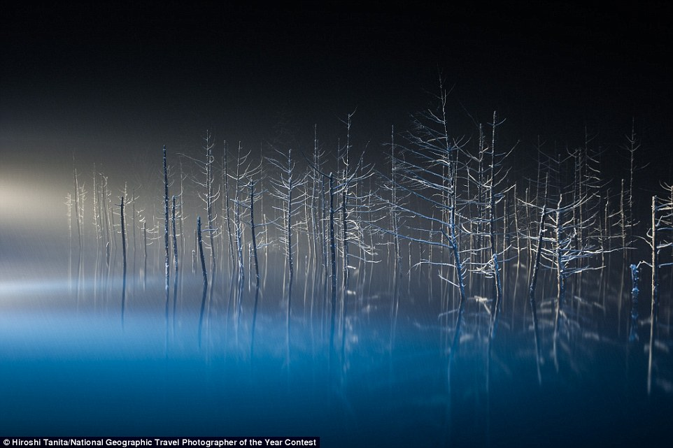 A Japanese larch's twig looked like hands and feet of a ballet dancer when exposed to illumination (location: Biei, Hokkaido, Japan)