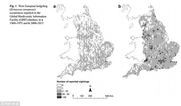 Hedgehog numbers drop across Europe as their habitats