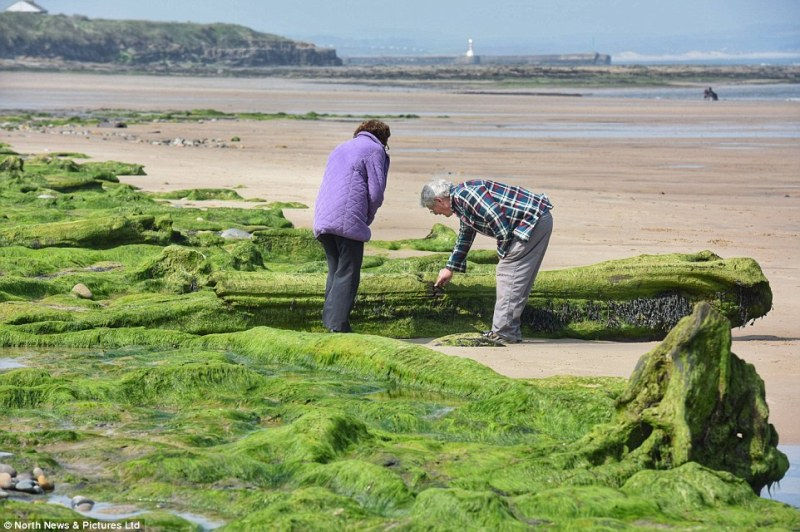 The uncovered forest has drawn interest from members of the public walking along the coast as they stop to inspect the preserved trees
