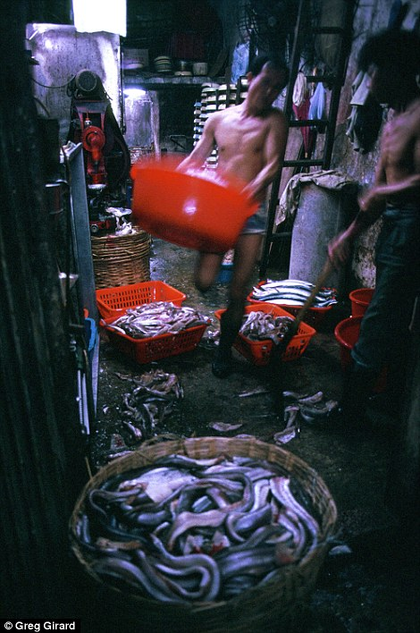 A worker carries buckets of eels at a fishball factory