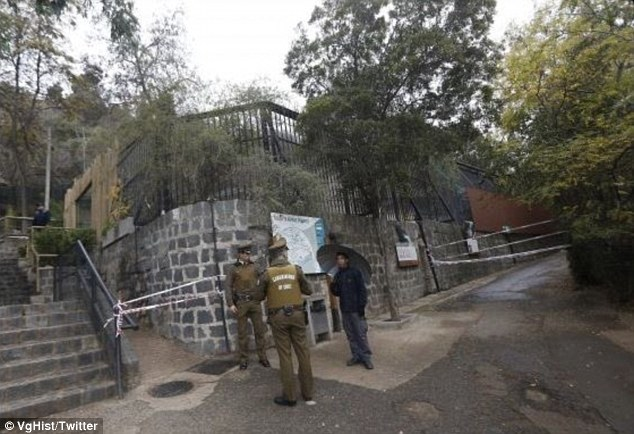 Safety: The entrances to the lion enclosures were closed off after the attack. Zoo director Alejandra Montalva said she was 'deeply affected' by the deaths of the two animals
