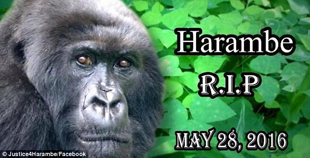 Zoo director Thane Maynard supported the response team's decision to put down the gorilla, but many disagreed. More than 1,000 people have already joined the Facebook group Justice for Harambe