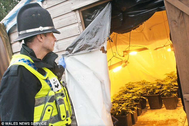 Investigation: A police swoop with more than 100 officers and 30 vehicles discovered that the Glynmill camp in Merthyr Tydfil, South Wales, was home to a ¿highly lucrative¿ cannabis farm
