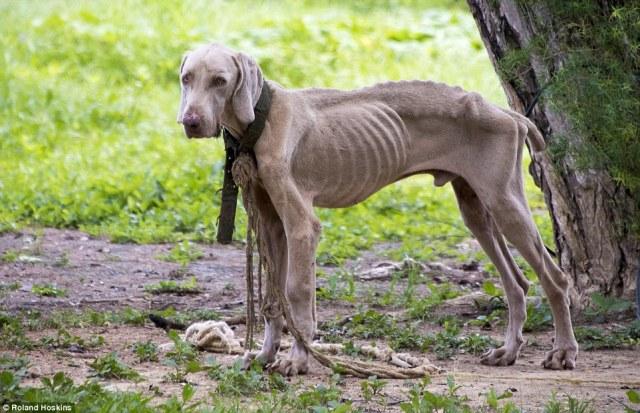 Image result for Venezuela's pets starving