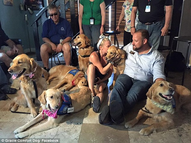 Pictured: The team of more than a dozen golden retrievers and dog handlers who arrived in Orlando, Florida, on Monday. They flew from all over the country, as far as Illinois, Nebraska, Tennessee, and South Carolina