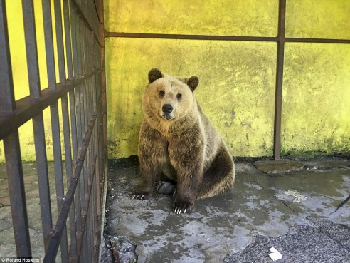 'In his small cage he is unable to express even the most basic natural behaviour. In this environment he is not able to follow his natural instincts, has no opportunity to move properly, look for food, climb, dig or take a bath'