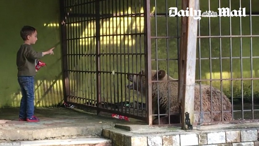 Tomi is one of about 80 brown bears thought to be trapped in cages at restaurants, petrol stations and beaches across Albania