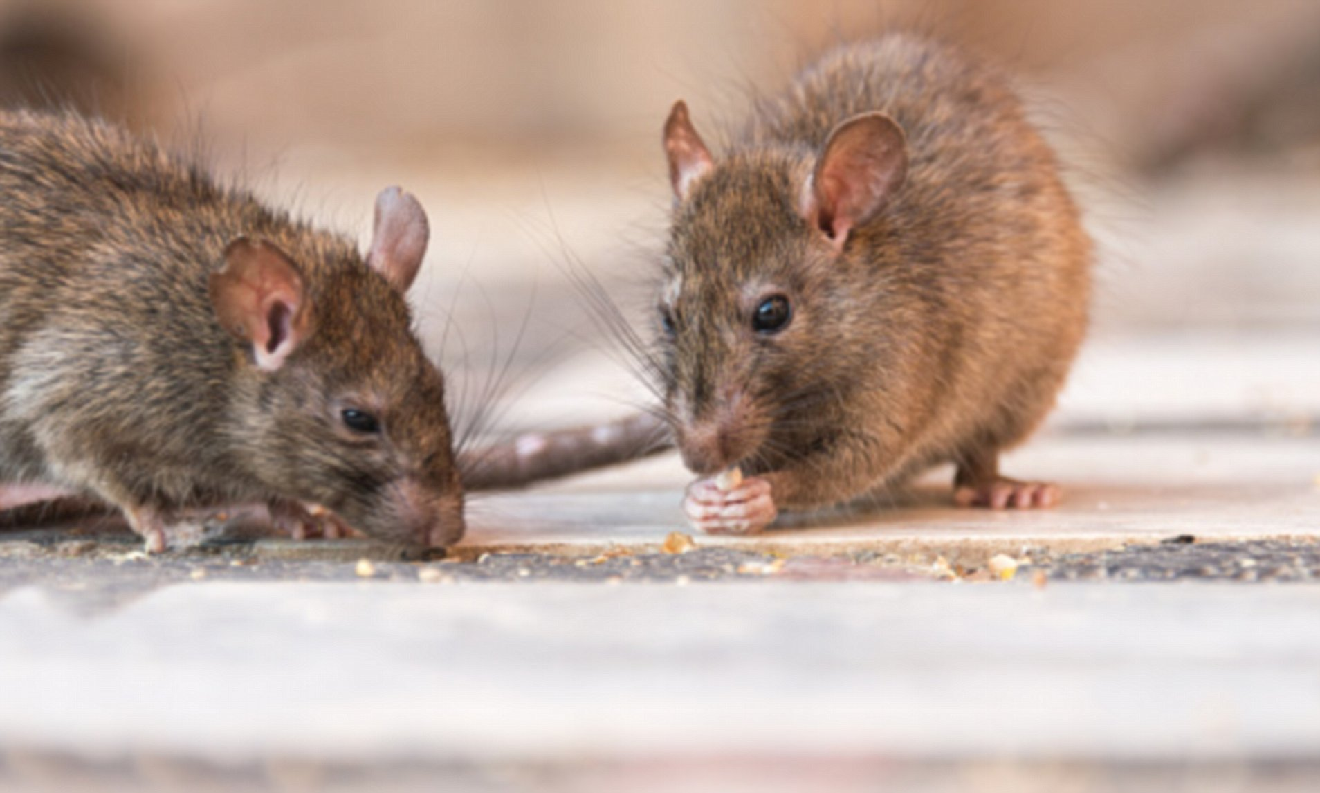 Child infected with life-threatening hantavirus after being inside ...