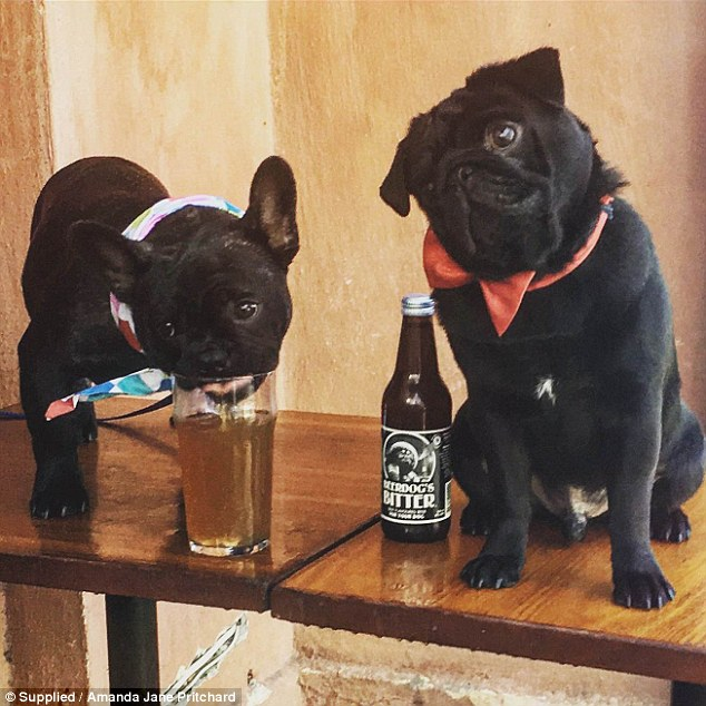 Puppy love: Dogs Bar in Melbourne have started selling a 'Beer Dog Bitter' crafted especially for canines (pictured)