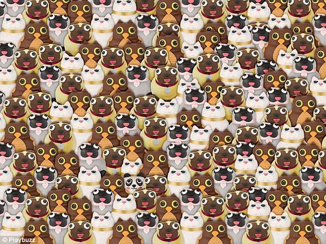 Can You Spot The Panda Hidden Among Pugs Cats And Owls
